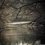 <b>Река Ведуга (фото)</b>