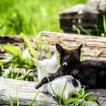 <b>Чисто котиков напостить (фото)</b>