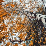 <b>Вчера в лесу (фото)</b>